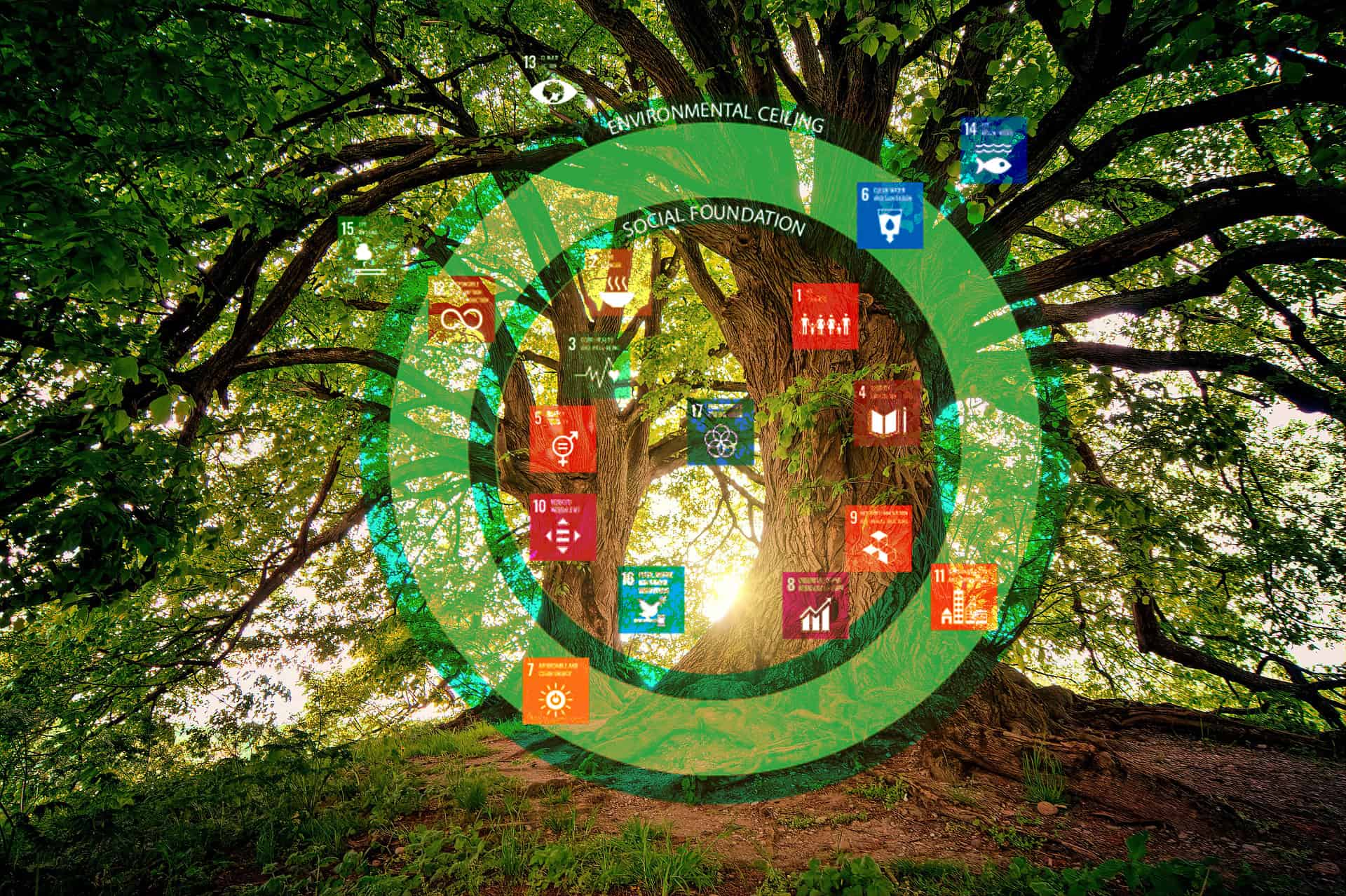 A tree overlayed with the SDGs and Doughnut Model